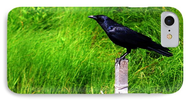 IPhone Case featuring the photograph Male Boat-tailed Grackle by Mary Beth Landis
