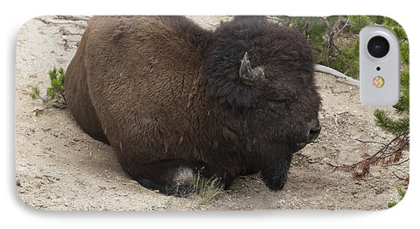 Male Buffalo At Hot Springs Phone Case by Belinda Greb