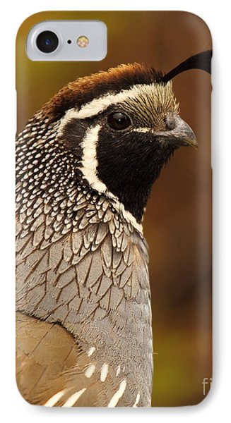 IPhone Case featuring the photograph Male California Quail by Max Allen