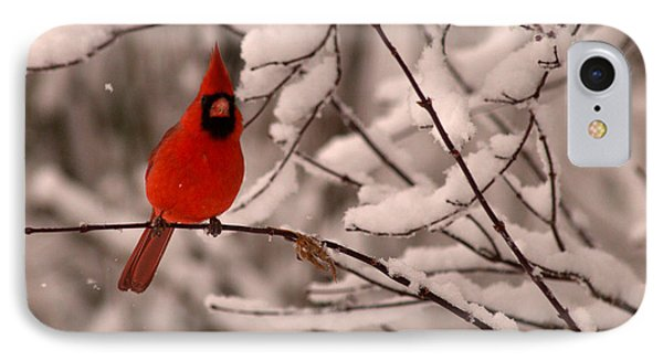 Male Cardinal In Snow IPhone Case by Jane Axman