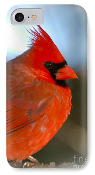 IPhone Case featuring the photograph Male Cardinal  by Kerri Farley
