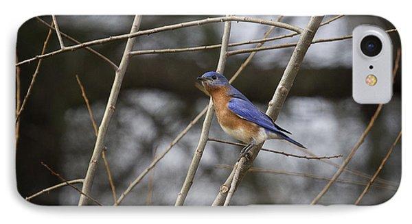 Male Eastern Bluebird Phone Case by Cris Hayes