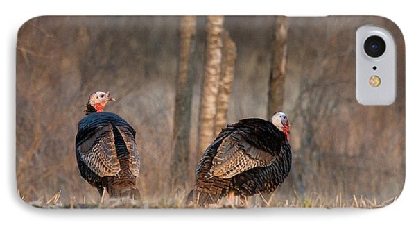 Male Eastern Wild Turkeys IPhone Case by Linda Freshwaters Arndt