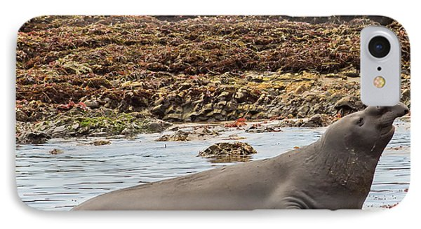 Male Elephant Seal In Ano Nuevo California State Park IPhone Case by Natural Focal Point Photography