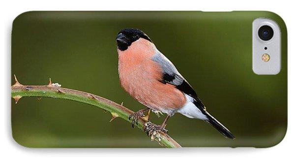Male Eurasian Bullfinch IPhone Case by Colin Varndell