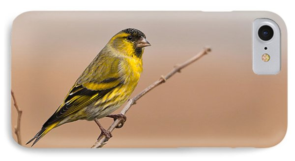 IPhone Case featuring the photograph Male Eurasian Siskin by Liz Leyden