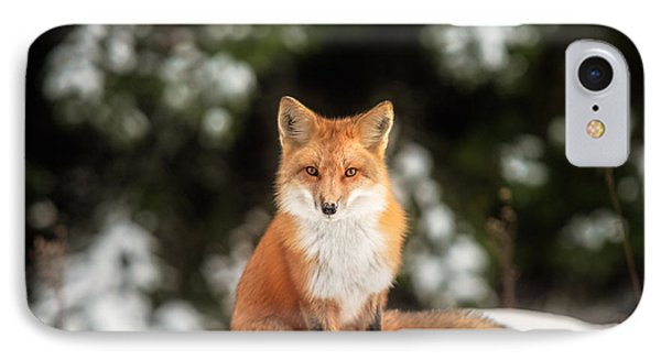 Male Fox IPhone Case by Robert Clifford
