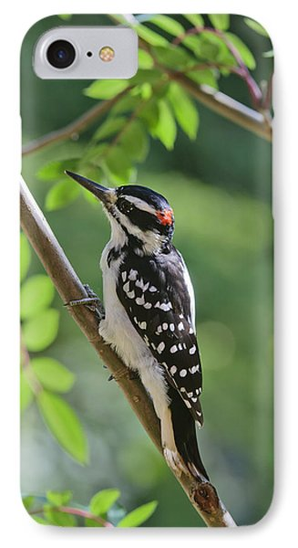 Male Hairy Woodpecker Picoides Villosus Phone Case by Kenneth Whitten