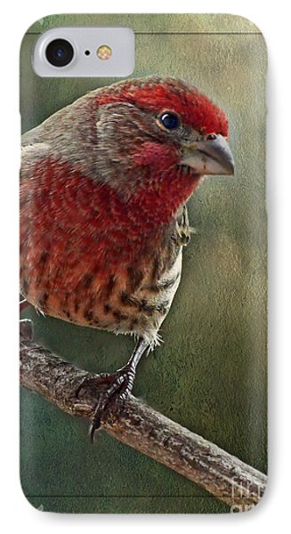 Male Housefinch With Green Texture And Decorations Phone Case by Debbie Portwood