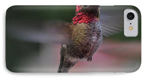 Male Hummingbird Anna In Flight IPhone Case by Jay Milo