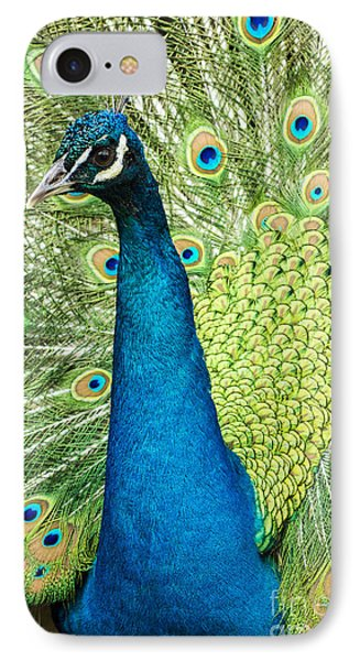 Male Indian Peacock Phone Case by Darleen Stry