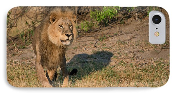 Male Lion On Lookout, Intense Look IPhone Case