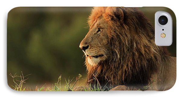 Lion iPhone 7 Case - Male Lion Watching Sunrise In Masai Mara by Massimo Mei