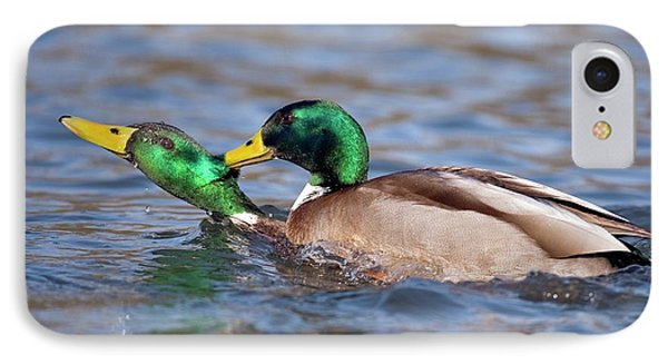 Male Mallards Fighting IPhone Case by Bildagentur-online/mcphoto-rolfes