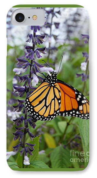 IPhone Case featuring the photograph Male Monarch Butterfly  by Eva Kaufman