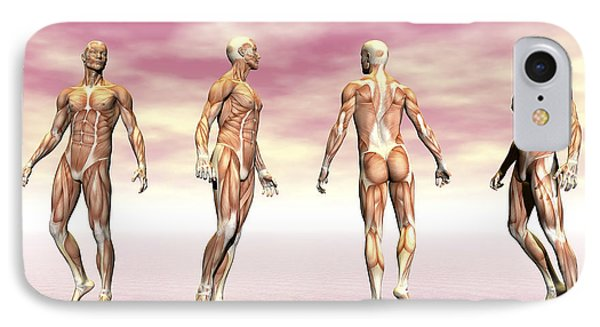 Male Muscular System From Four Points IPhone Case by Elena Duvernay