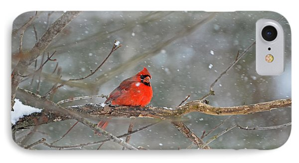 Male Northern Cardinal IPhone Case