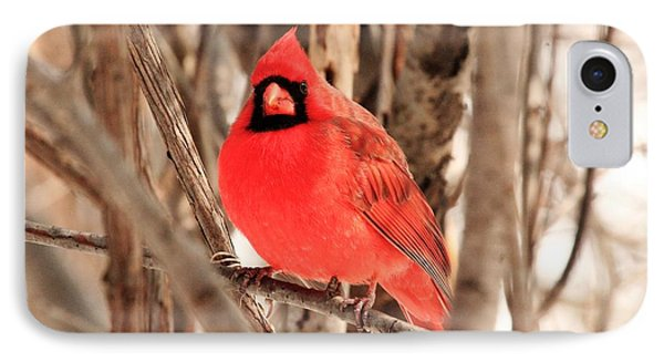 Male Northern Cardinal Phone Case by Michael Allen