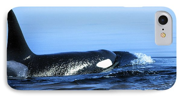 IPhone Case featuring the photograph Male Orca Off The San Juan Islands Washington 1986 by California Views Mr Pat Hathaway Archives