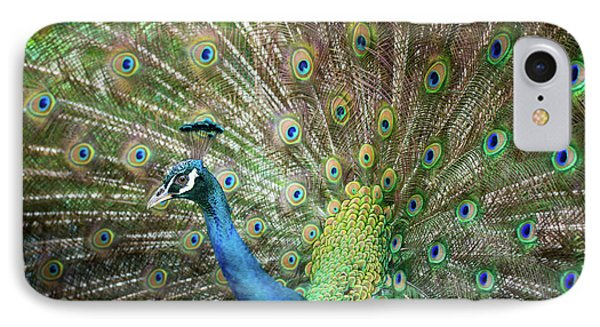 Male Peacock Displaying IPhone Case