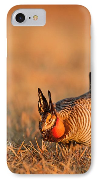 Male Prairie Chickens At Lek In Loup IPhone Case