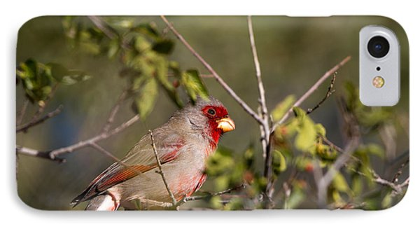 Pyrrhuloxia In Autumn IPhone Case by Martha Marks