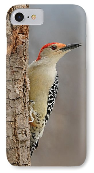 Male Redbellied Woodpecker 1 IPhone Case