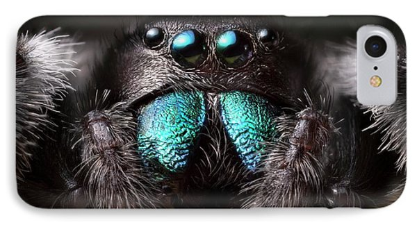 Male Regal Jumping Spider IPhone Case