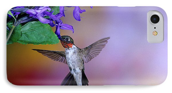 Male Ruby-throated Hummingbird IPhone Case by Panoramic Images
