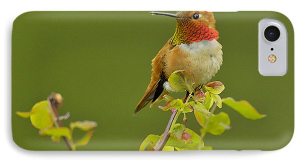 Male Rufous Hummingbird Phone Case by Tom and Pat Leeson