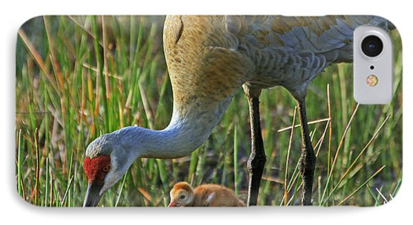Male Sandhill With 4 Day Old Chick IPhone Case by Larry Nieland