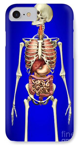 Male Skeleton With Internal Organs Phone Case by Leonello Calvetti
