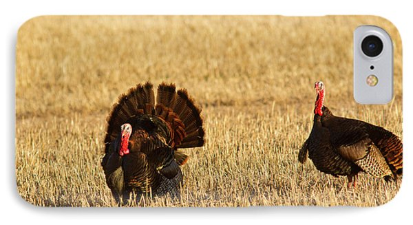 Male Tom Turkeys In Breeding Plumage IPhone Case