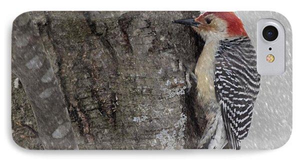 Male Woodpecker Feeding  IPhone Case by Betty  Pauwels