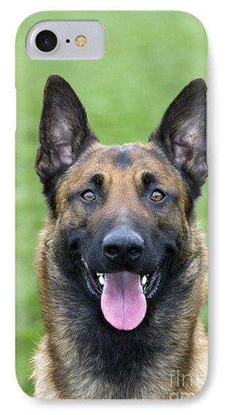 Malinois, Belgian Shepherd Dog IPhone Case by Johan De Meester