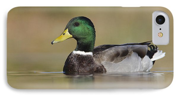 IPhone Case featuring the photograph Mallard by Bryan Keil