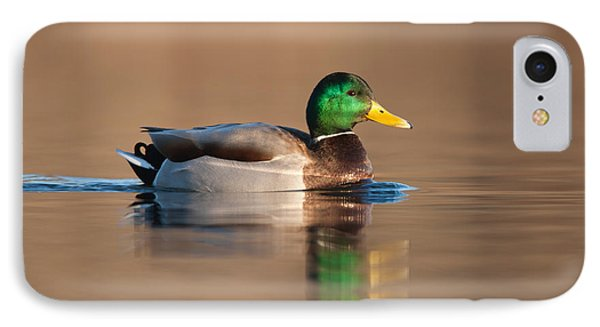 Mallard Phone Case by Clarence Holmes