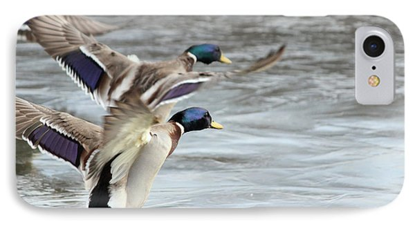Mallard Double Take Off IPhone Case
