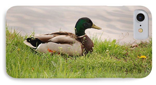 IPhone Case featuring the photograph Mallard Drake by Mark McReynolds