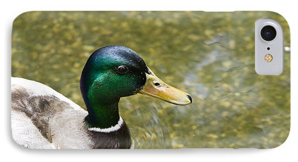 Mallard Duck Closeup IPhone Case by David Millenheft