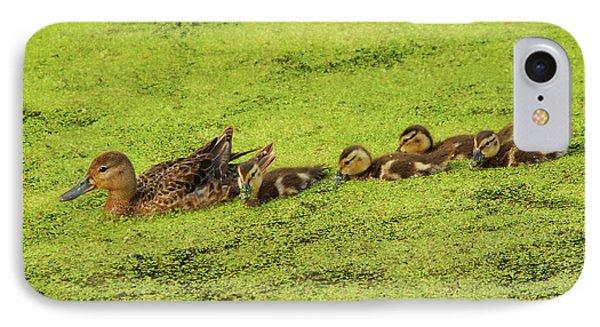 Mallard Female And Ducklings In Algae IPhone Case by Michel Hersen