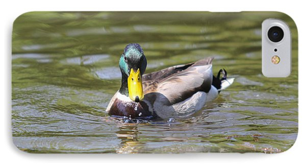 IPhone Case featuring the photograph Mallard Green Headed Duck Anas Platyrhynchos - Male by Jivko Nakev