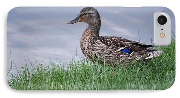 IPhone Case featuring the photograph Mallard Hen by Mark McReynolds