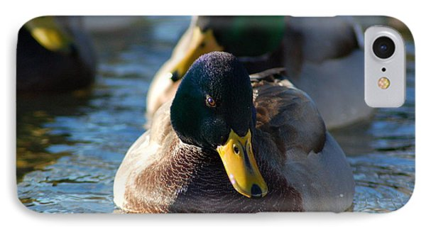 IPhone Case featuring the photograph Mallard In The Morning Sun by Patrick Shupert