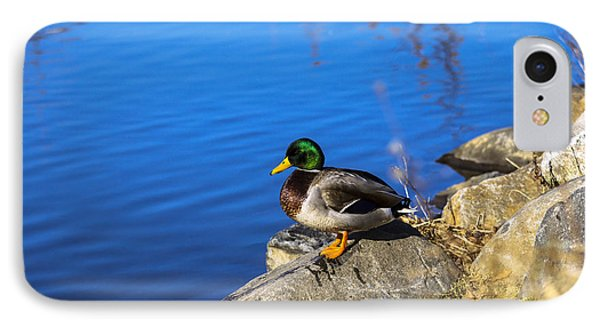 Mallard Looking Over His Domain IPhone Case