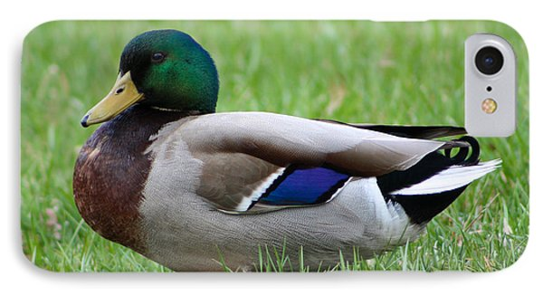 IPhone Case featuring the photograph Mallard Portrait by Anita Oakley