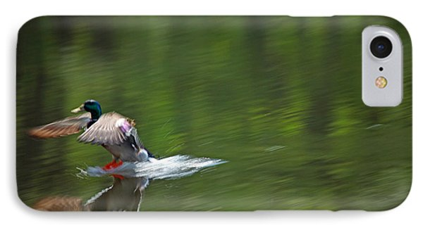 Mallard Splash Down IPhone Case
