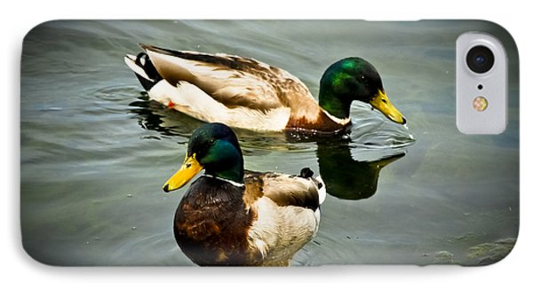 Mallards On Mendota IPhone Case