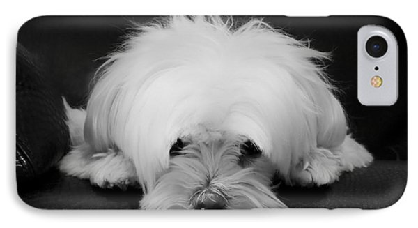 Maltese Dog IPhone Case