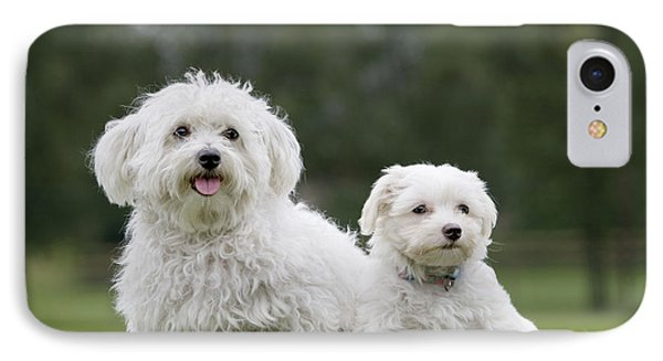Maltese Dog With Puppy IPhone Case by Johan De Meester